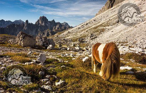 Pastva v Dolomitech