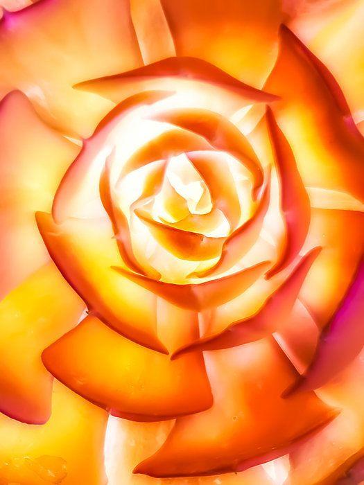 Soft Succulent Petals Orange Macro Art by HeatherJoyceMorrill