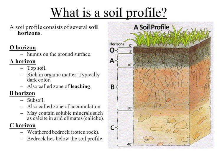 Soil Horizons Gallery | Earth Science | Garden maintenance ...