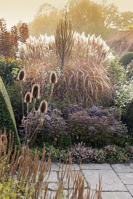 Ornamental Grasses in the Peacock Garden at Great Dixter, Northiam with Teasels, Miscanthus Sinensis Malepartus, Verbascum, Aster Lateriflorus Horizontalis and Persicaria Vaccinifolium