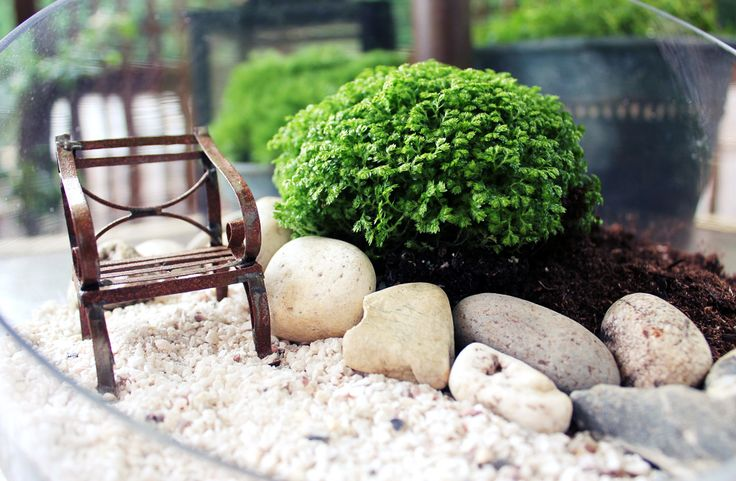 5 Five Minute Mini Gardens: Use terrariums, crates and tiny pots to create adorable little gardens.: Gardens Ideas, Minute Minis, Create Miniatures, Miniature Gardens, Glasses Terrarrium, Fairies Gardens, Minis Gardens, Miniatures Gardens, Gardens Terrarium