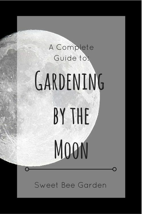 Planting and gardening according to the phases of the moon dates back centuries…