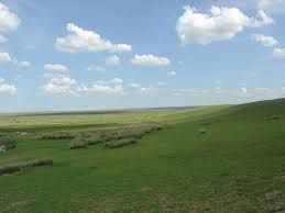 grassland google definition a large open area of country covered with grass, especially one used for grazing. text example George Hadley stood on the African grassland alone. my sentence the grasslands of Africa are beautiful