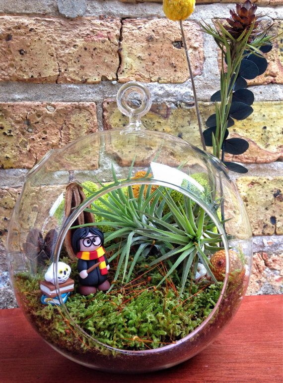 Harry Potter Air Plant and Moss Terrarium A by lovelyterrariums