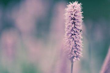 Meadow in pastel colors