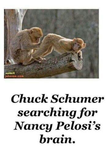 OMG f!@#ing hilarious