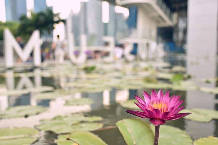 Lotus flowers at Marina Bay Sands