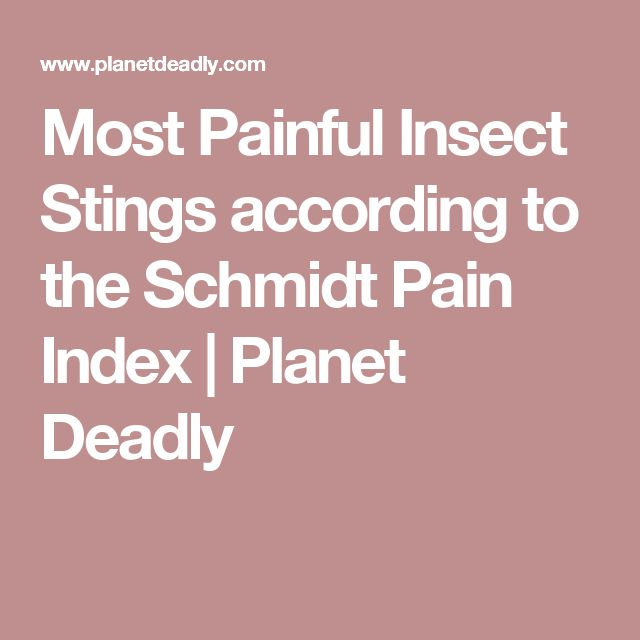 Most Painful Insect Stings according to the Schmidt Pain Index   Planet Deadly