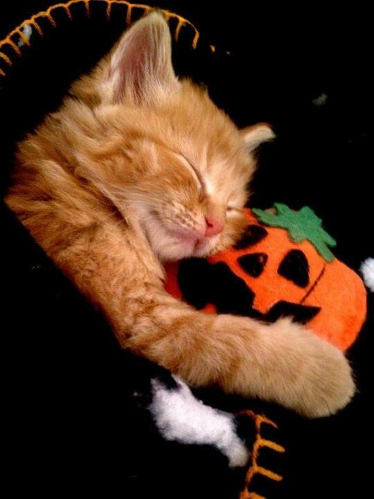 have a purr fect halloween