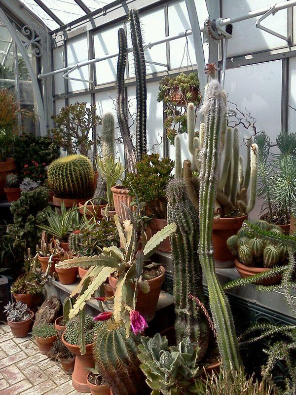 Succulents, Cactus, Etc.