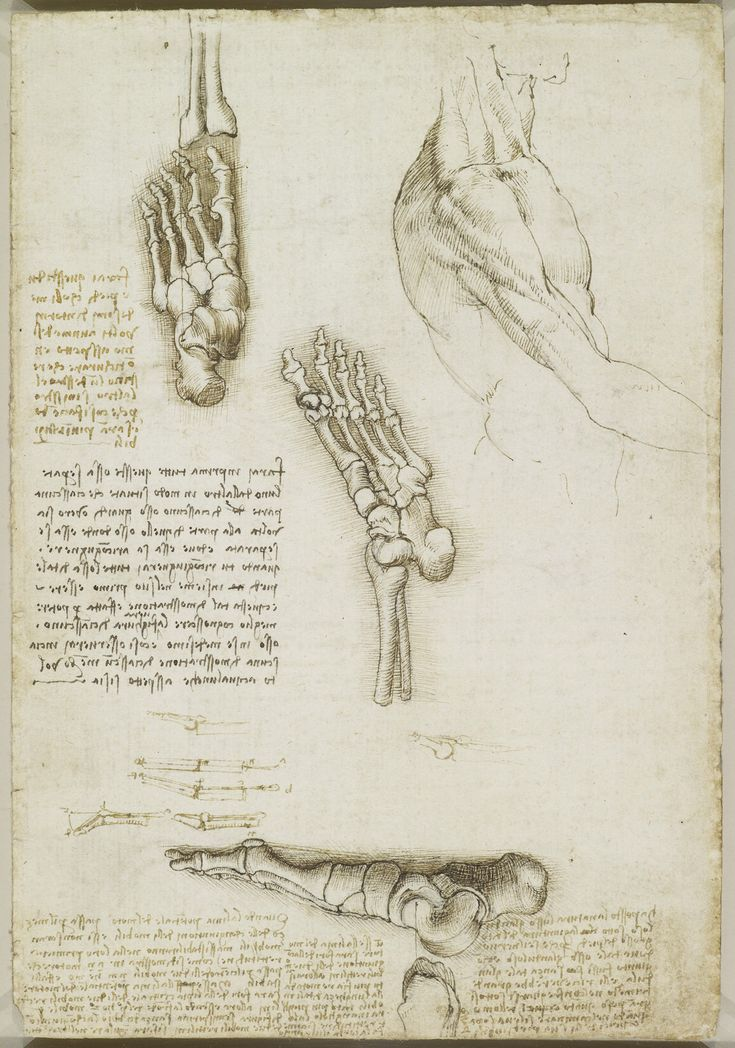 Leonardo da Vinci, 1452-1519, Italian, The bones of the foot, c.1510-11. Pen and ink with wash, over black chalk, 29.3 x 20.1 cm. Royal Collection, Windsor. Royal Collection Trust, Windsor. High Renaissance.