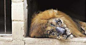 Proibição de Zoológicos no Brasil