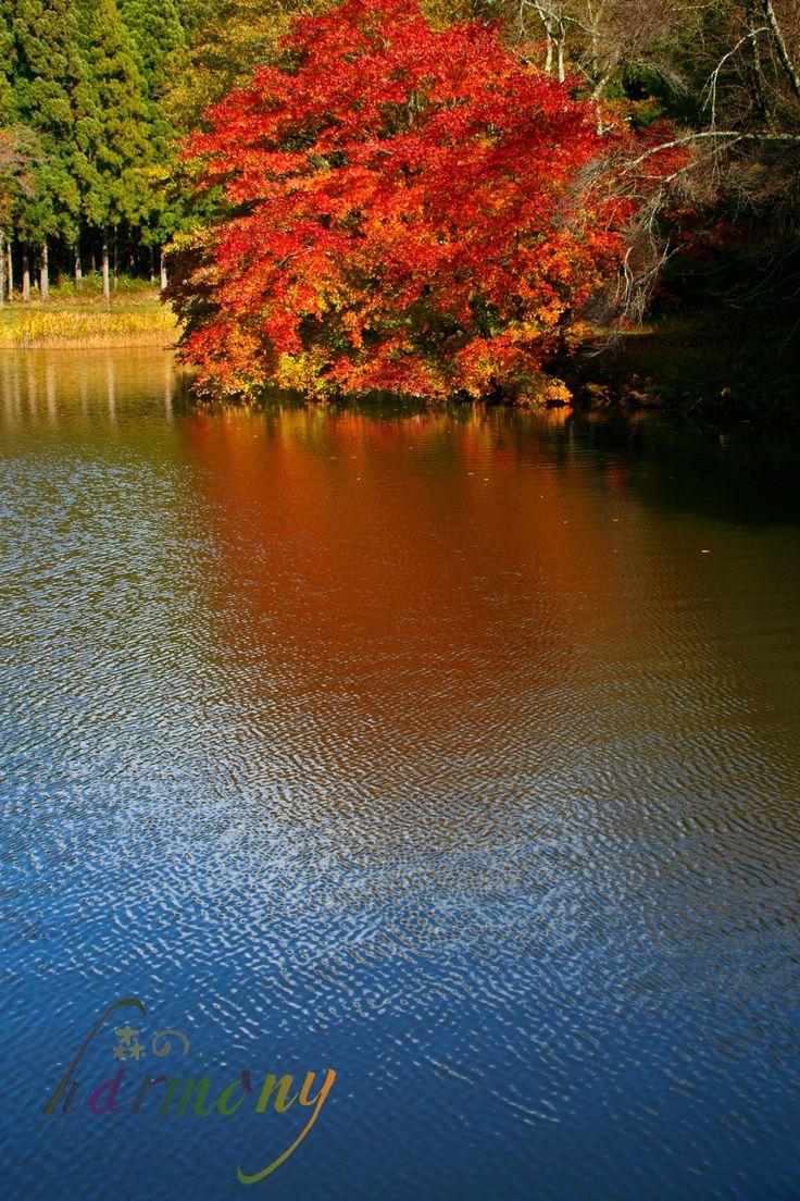 autumn -- shiwa-town iwate pref. japan