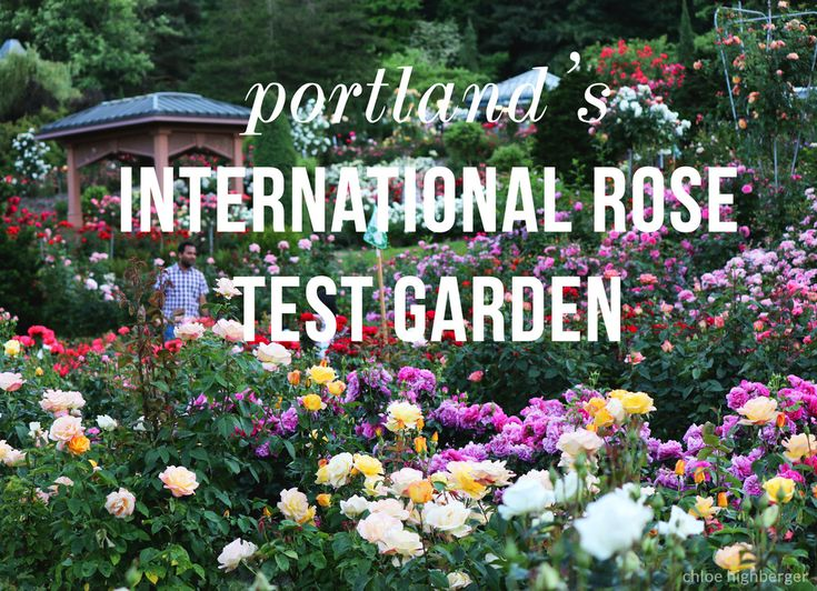 21 best museums in the inland empire images on pinterest museums empire and coachella valley for Portland international rose test garden