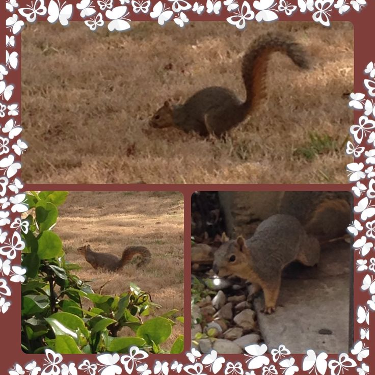 This little squirrel doesn't fear dogs. Why would he fear humans....