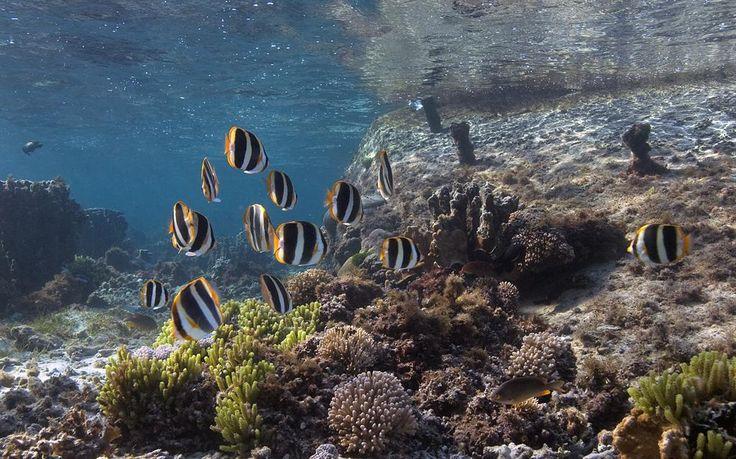 Marine Adventures - BIG Bay Out www.lordhoweisland.info