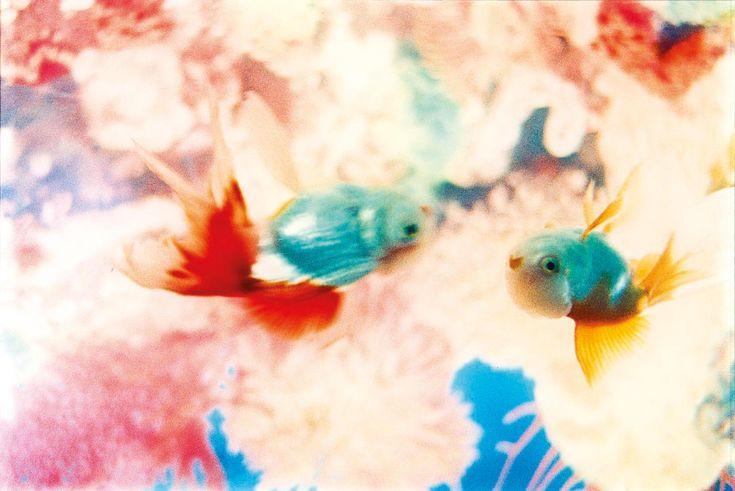 Mika Ninagawa, Goldfish
