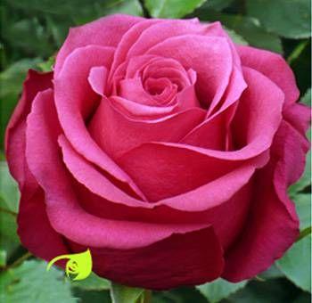 25 best Flores preciosas images by SuenosDeMujer on Pinterest
