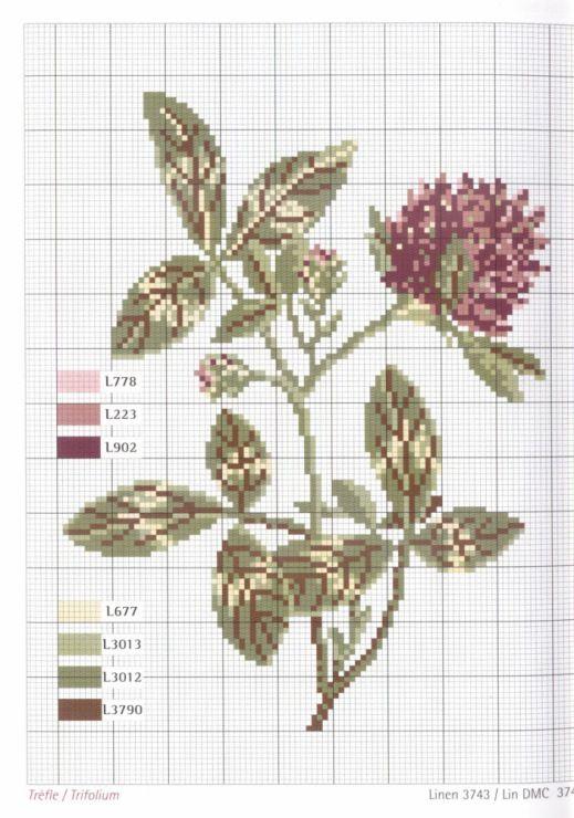 Gallery.ru / Fotók # 1 - Herbier - Mongia