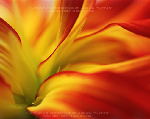 Dahlia on fireArt Talent L, Beautiful Flower, Amazing Art, Colors Photos, Random Things, Colors Photography, Flower Power, Artsy Fartsy, Beautiful Things