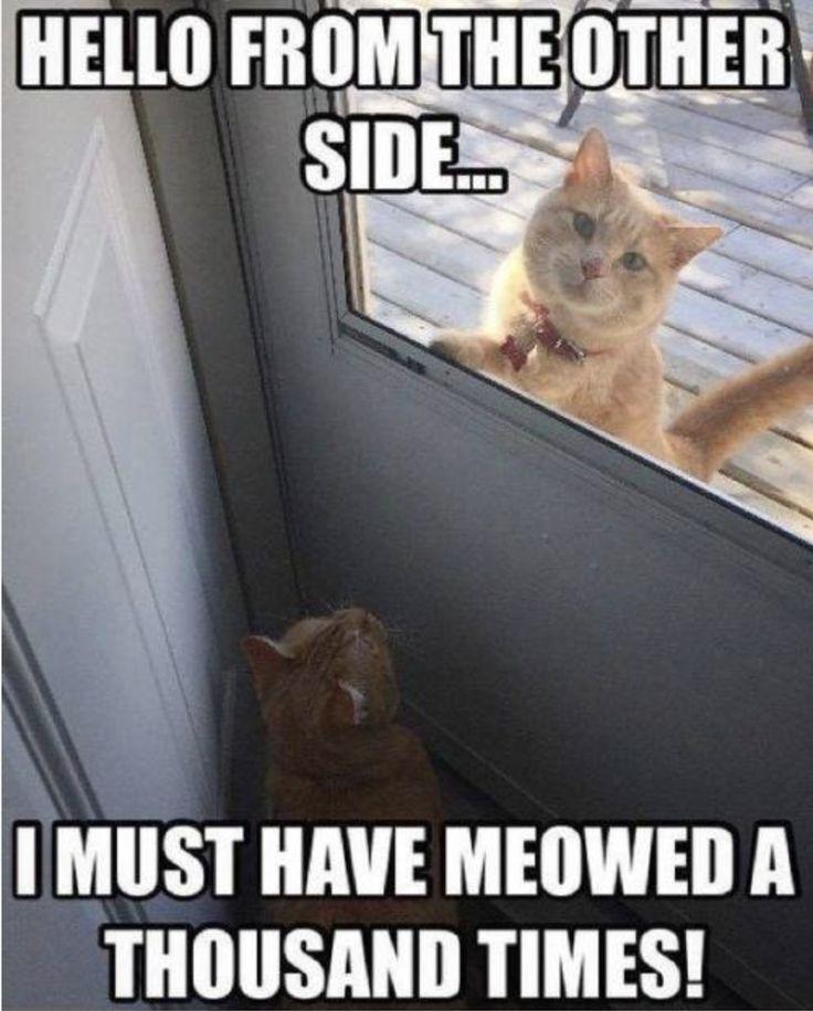 Alle Haustiere sind gleich, aber einige Meme sind lustiger als andere.   – Animals (Funny, Cute, Sad)
