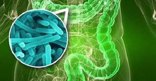 10 signes qui indiquent une prolifération bactérienne intestinale - Améliore ta Santé