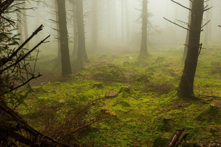 Dublin mountains, foggy pine forest
