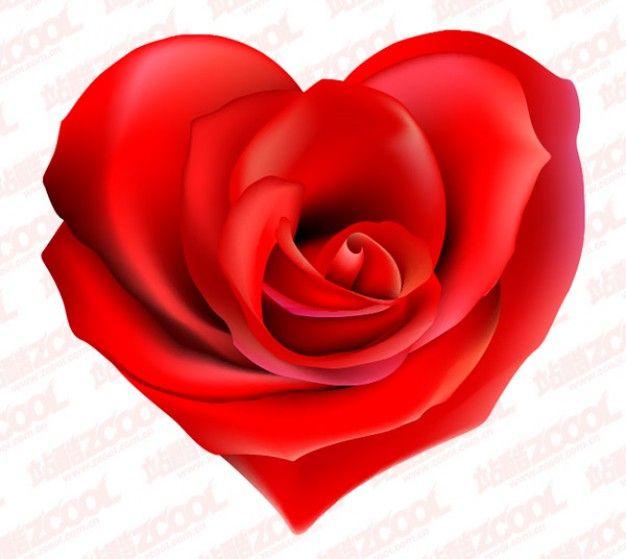 rosa roja vector material en forma de corazón