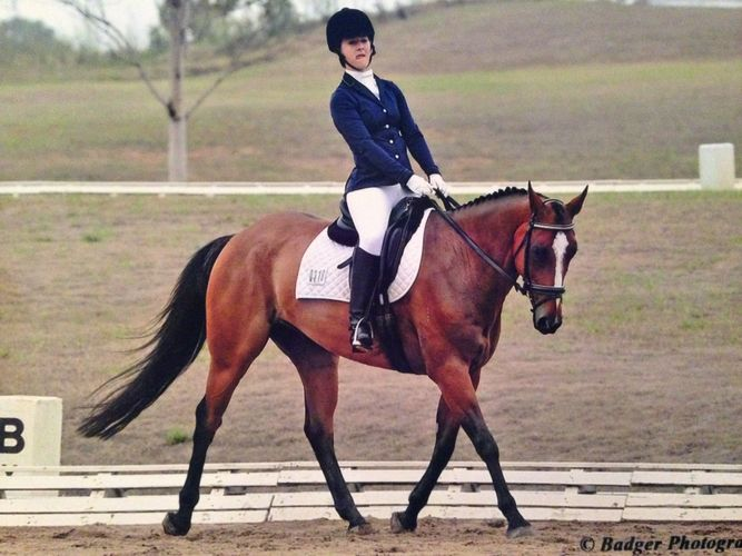 $4500 QLD - Irish Sport Horse | Allrounder horses | Horse for sale in QLD | Australia | Horse Deals