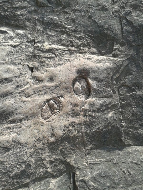 Hoof marks at ranthambhore Fort near #ganesh Pole