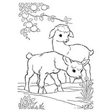 25 Cute Goat Coloring Pages For Your Toddler Farm Animal