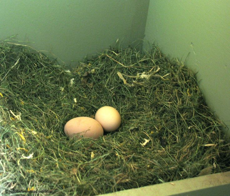 Using Herbs in the Nest Box-not only smells nice and is healthy for the chickens to eat but it is a Natural Lice and Mite Prevention: