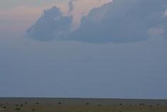 Passage To Africa - Maasai Mara - Kenya