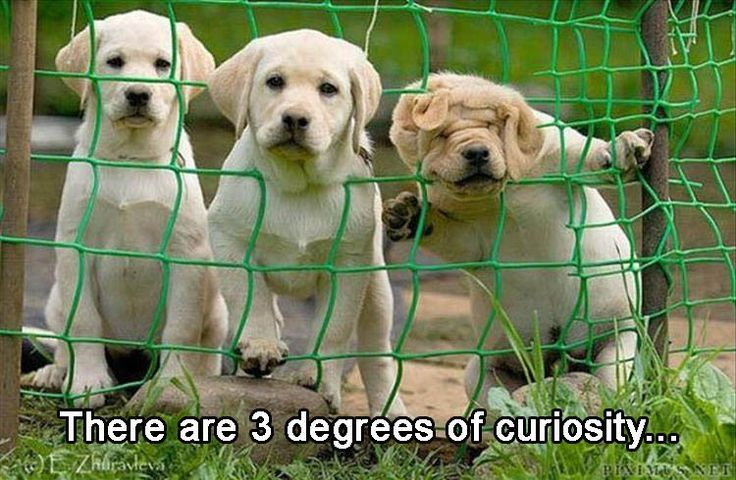 The three degrees of curiosity.