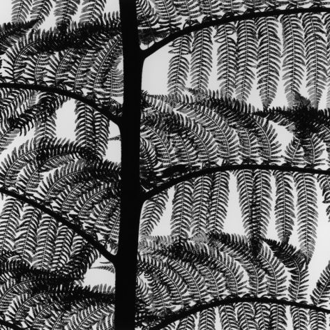 Photographic Print - By Brett Weston