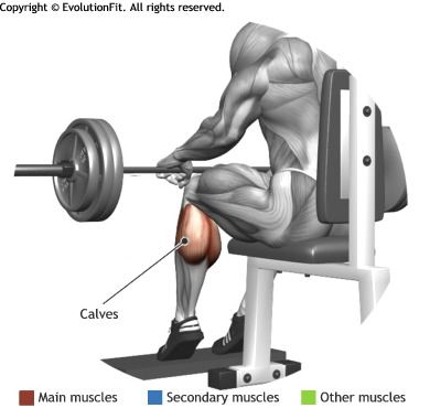 CALVES -  BARBELL SEATED CALF RAISE