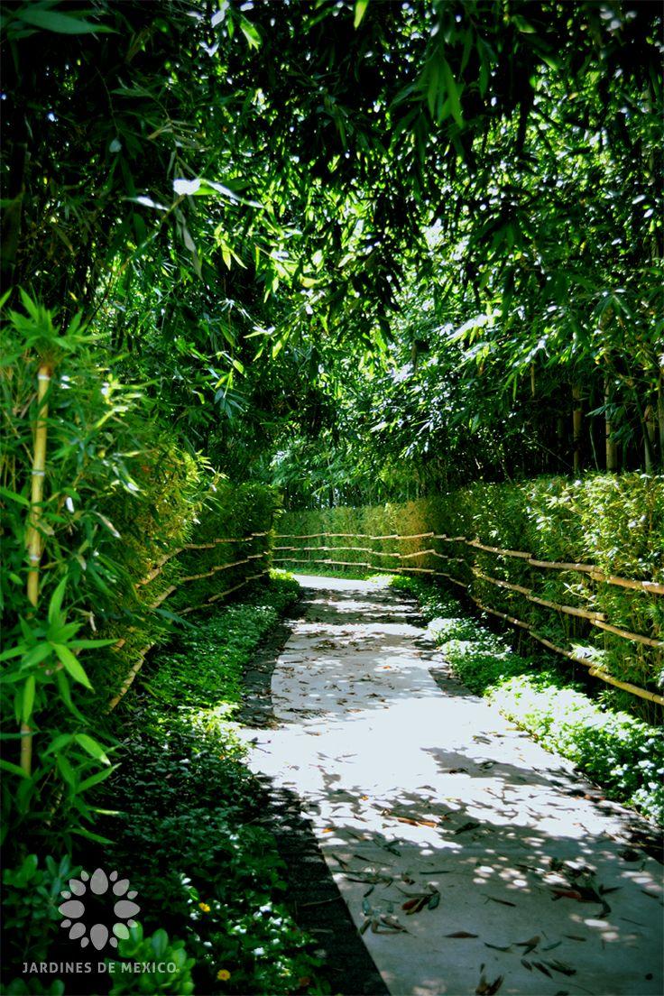 """Pasaje de bambú que limpia el alma en el """"Jardín estilo Japonés"""" de Jardines de México.   Morelos, México. #paisajismo #landscaping  #Turismo #Tourism #Naturaleza #Nature #JardinesDeMéxico.  http://jardinesdemexico.org"""