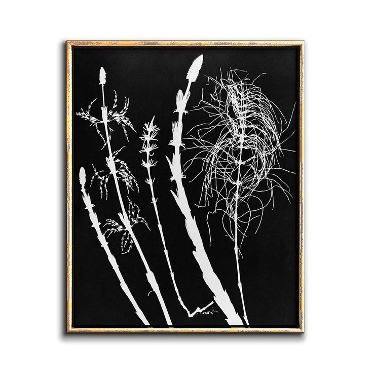 Black and white botanical art printable contemporary wall decor