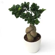 Buying Plants Online,  http://forums.webtoolhub.com/members/17596-martinwood16  When you are choosing the plants distribution, make certain that you remember the weather problems of the place.