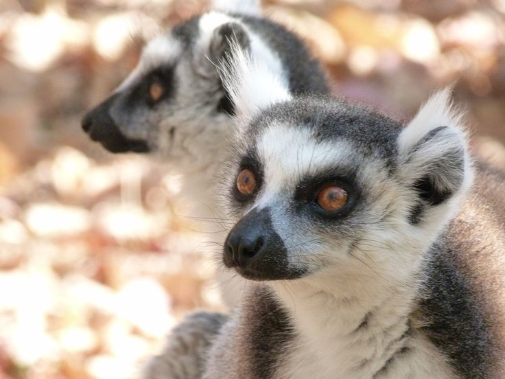 Ringtailed lemurs at the Anja Village Reserve, photo taken by our travellers Sarah and Bob