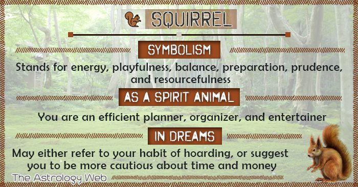 squirrel symbolism spirit animal