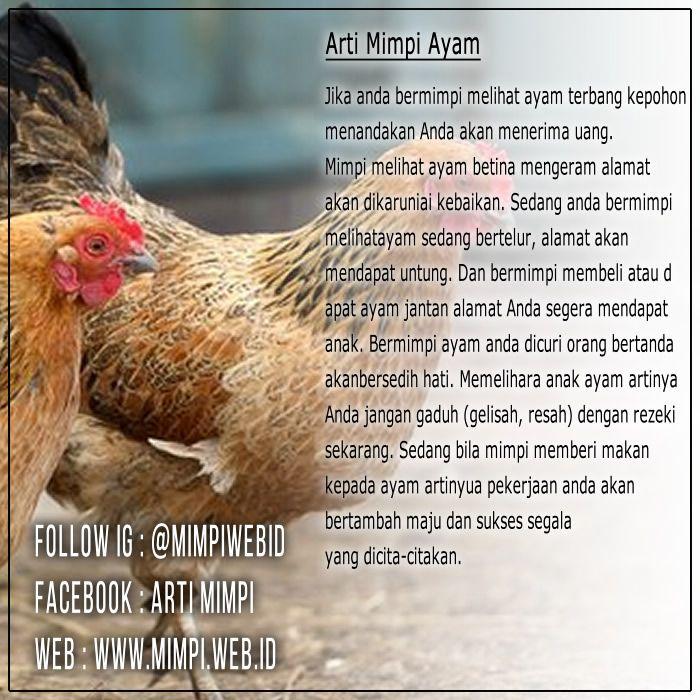 41 Mimpi melihat ayam bertelur togel terbaru