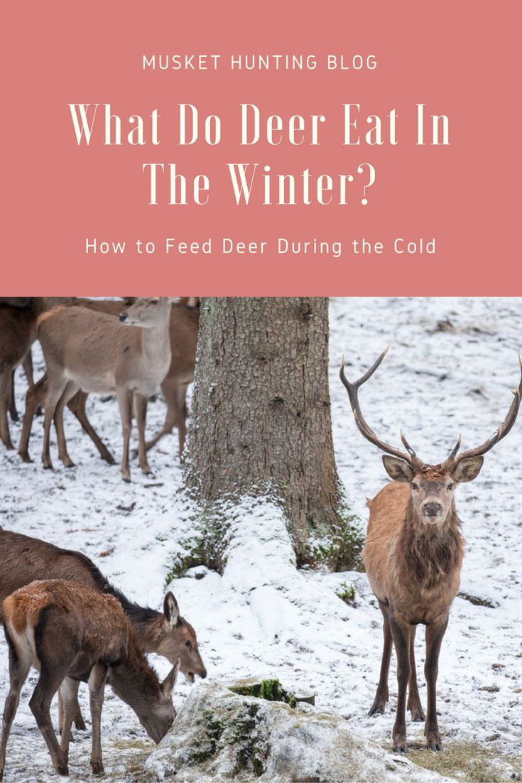 what do deer eat in the winter here are some of the important factors to
