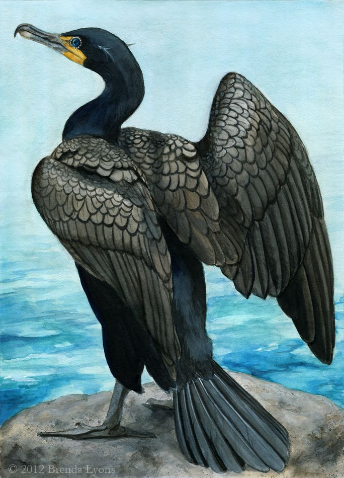 Double-Crested Cormorant by windfalcon on deviantART ... looks like an Anheinga