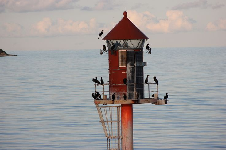 Seevögel bei Gedser