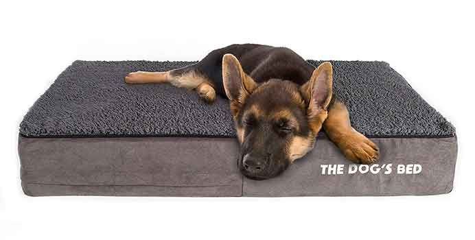 Top 10 Best Dog Bed In 2021 Reviews Best10az Cool Dog Beds Best Dogs Dogs