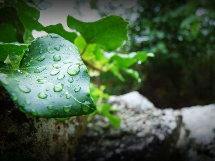 Morning dew in Istria. #amazing #istria #croatia