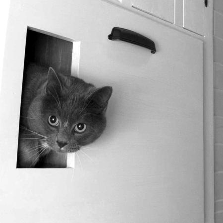 Cat using bathroom outside litter box