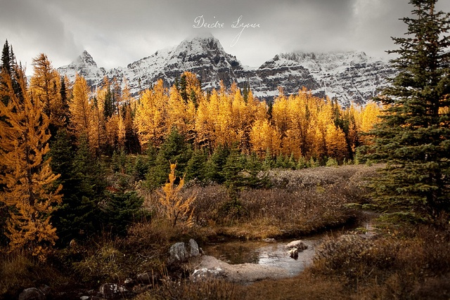 Breath-takingly lovely Canada Rocky Mountain autumn scenery.