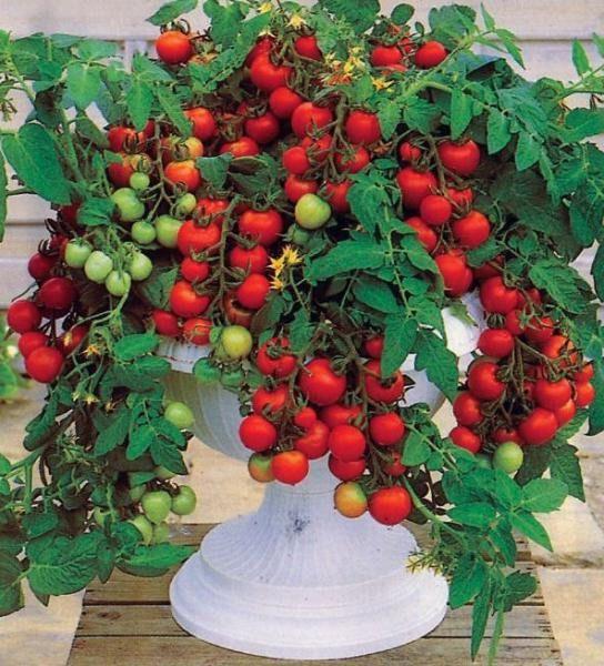 Сад-огород на балконе: выращиваем пряные травы, ягоды и овощи за окном городской квартиры   Балкон, лоджия   DecorWind.ru